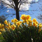 Mit dem Hausbau im Frühling starten