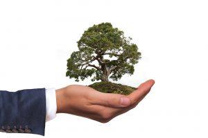 Hand hält Baum in Händen